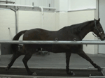 Slow Motion Horse running test